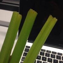 Celery: AKA, nature's floss.